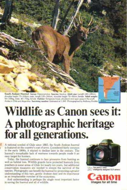Canon T90 SLR Camera – South Andean Huemul Deer (1986)