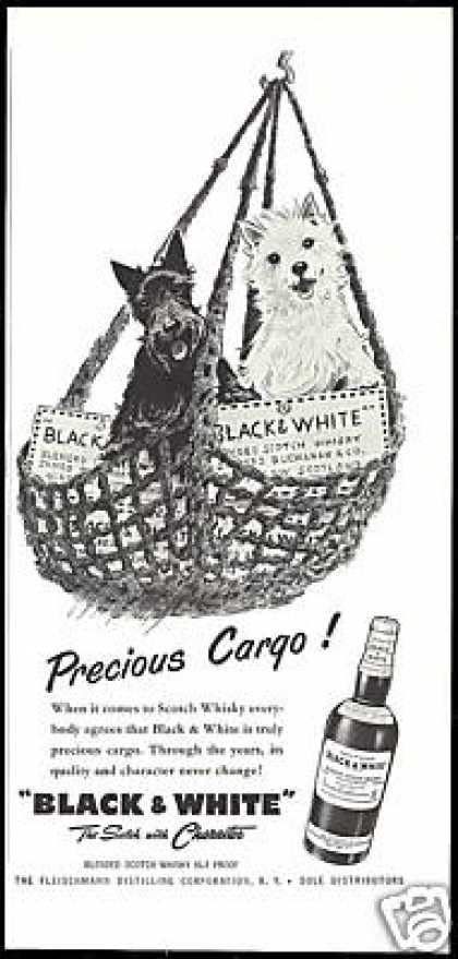 Scottish Terrier Westie Precious B&W Scotch (1956)