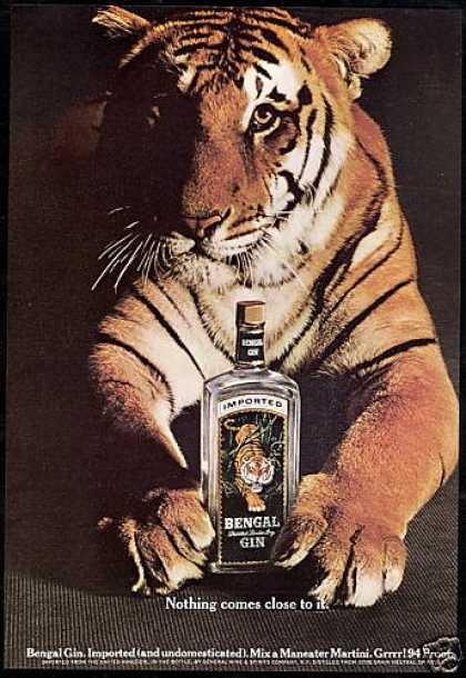 Bengal Tiger Gin Bottle Photo (1967)