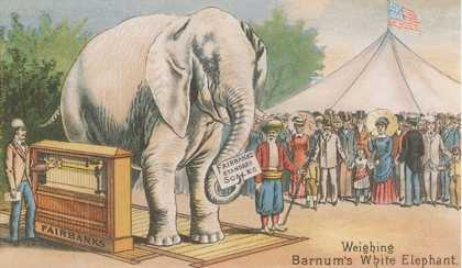 Barnum's White Elephant on Scale