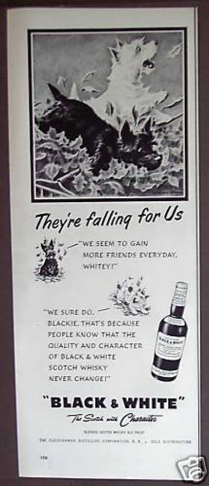 Black & White Scotch Whisky Dogs (1953)