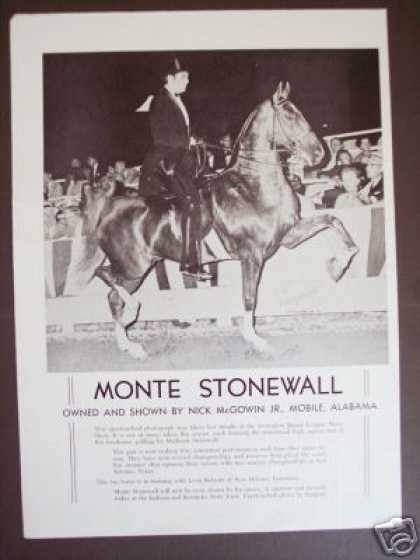 Show Horse Monte Stonewall Sargent Photo Trade (1965)