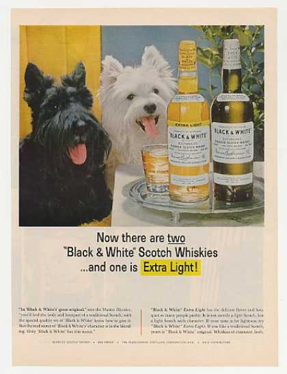 Black & White Scotch Extra Light Scotty Westie (1964)