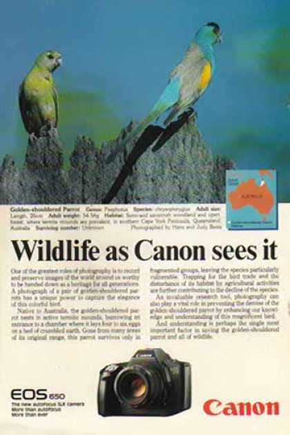 Canon EOS 650 SLR Camera – Golden Shouldered Parrot (1987)
