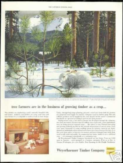 Snowshoe Rabbit Tree Farm Weyerhaeuser Timber (1954)