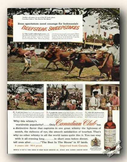 Canadian Club Madura Java Bull Derby Photos (1956)