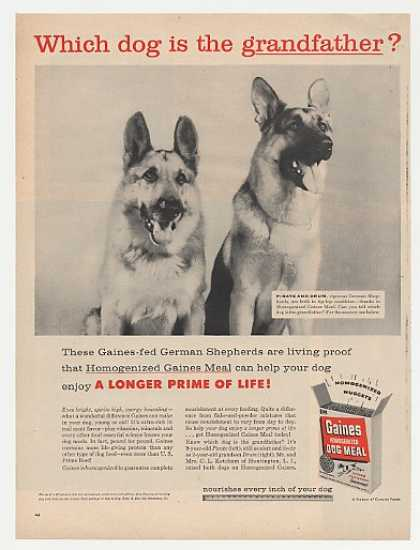 German Shepherds Gaines Dog Meal Photo (1956)