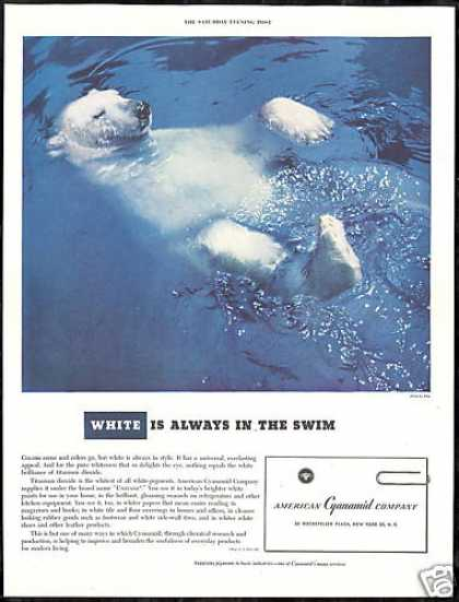 Polar Bear Photo American Cyanamid Co Vintage (1950)