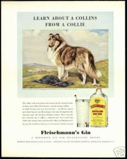 Collie Dog Sheep Fleischmanns Gin Vintage (1940)