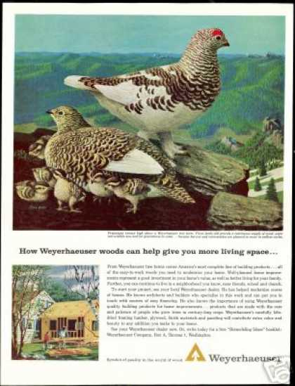 Ptarmigan Birds Stan Galli Art Weyerhaeuser (1963)