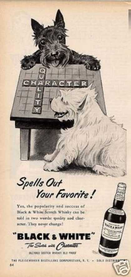 "B&w Ad ""Spells Out Your..."" Westie/scottie (1955)"
