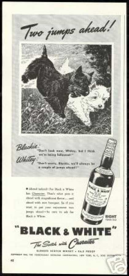 Scottish Terrier Westie Dog Jumping B&W Scotch (1941)