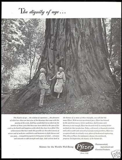 Pfizer Pharmaceutical Dignity of Age Redwoods (1958)