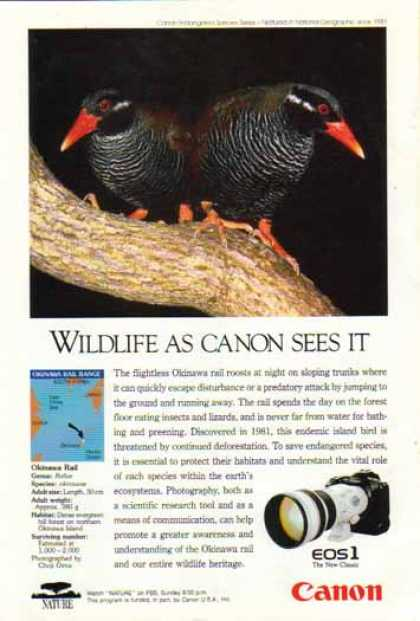 Canon EOS1 Camera Lens – Okinawa Rail Bird (1993)