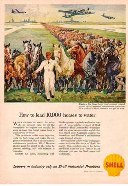 Shell Company – 10,000 Horses to Water (1958)