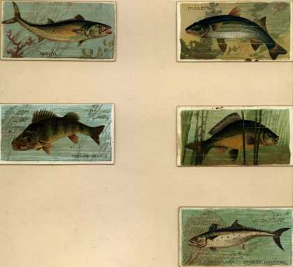 W. Duke Sons & Co.'s Duke's Cigarettes – Fishers and Fish – Image 4