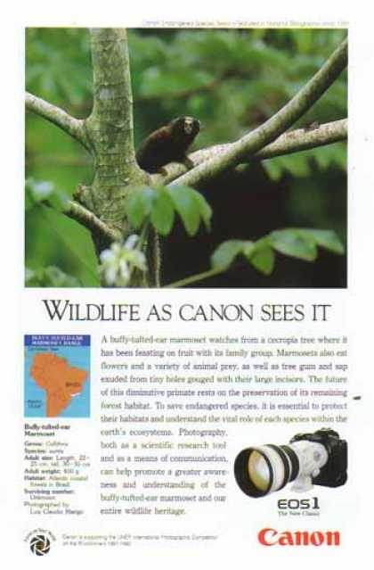 Canon EOS1 Camera Lens – Buff Tufted Ear Marmoset Monkey (1992)