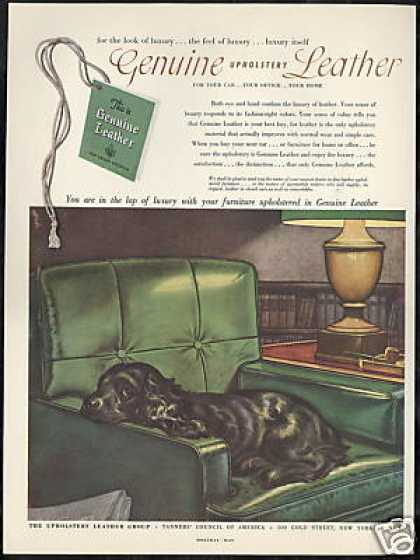 Black Cocker Spaniel Dog Green Chair Leather (1952)