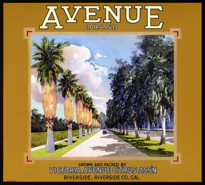 Avenue Brand Oranges, c. 			s (1920)