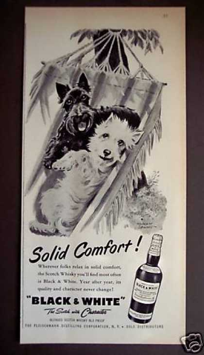 Scotty Dogs In Hammock Black & White Scotch (1956)