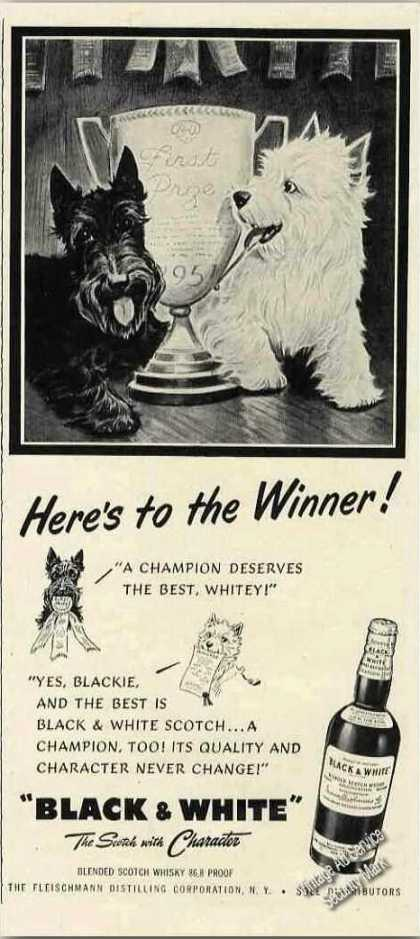 B&w Scotch Terrier/westie Here's To the Winner (1951)