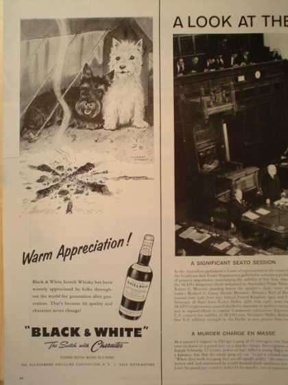 Black and White Scotch Scottie Dogs Camping TEAR ON LEFT SIDE (1957)