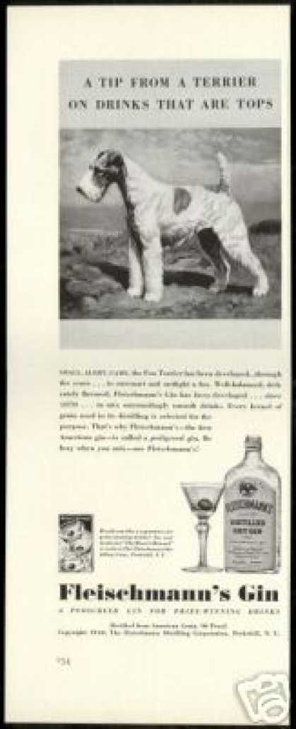 Wire Fox Terrier Dog Fleischmann's Gin (1940)