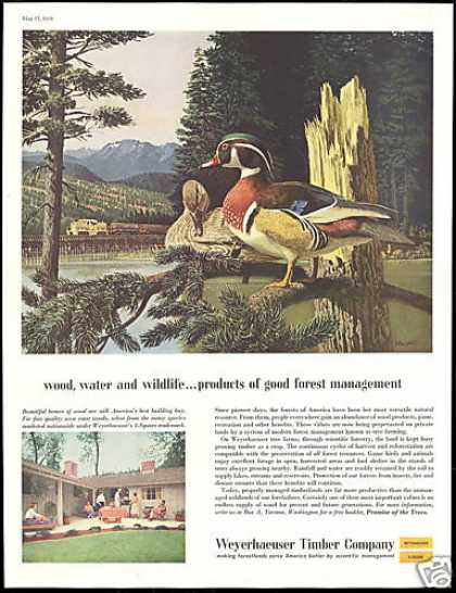 Stan Galli Duck Art Weyerhaeuser Co (1958)