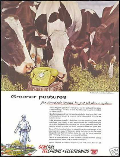 GTE Telephone Cows Renk Dairy Farm Wisconsin (1959)