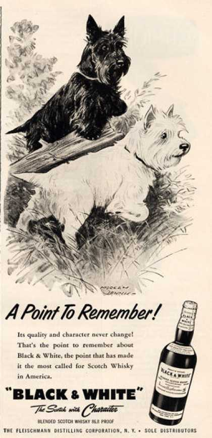 Black & White Scottish Terrier Hunting Dennis (1957)