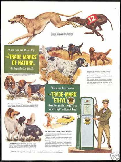 Ethyl Gas Greyhound Whippet Collie Etc Dog (1949)