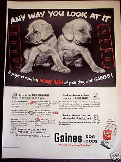 Puppy Photo Gaines Meal Dog Food (1950)