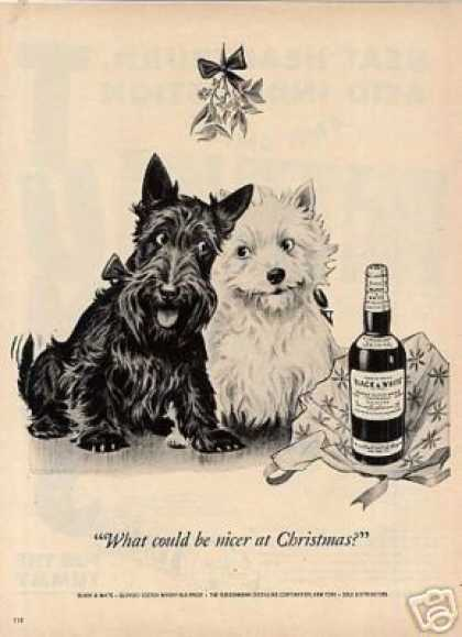 """B&w Ad """"What Could Be Nicer..."""" Scottie/westie (1951)"""
