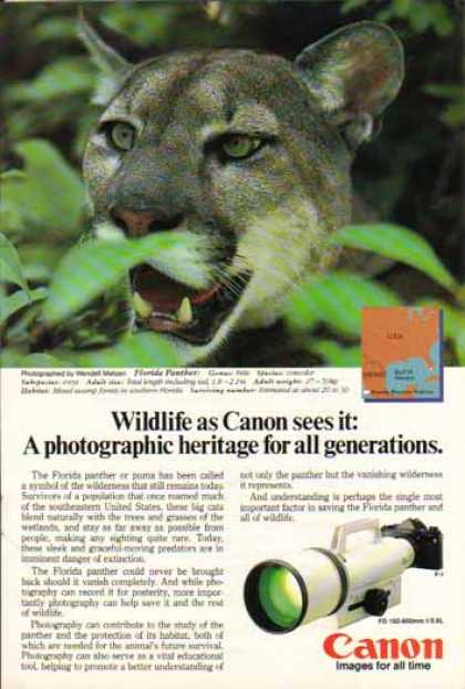 Canon FD 150-600mm f/5.6L Lens – Florida Panther (1985)
