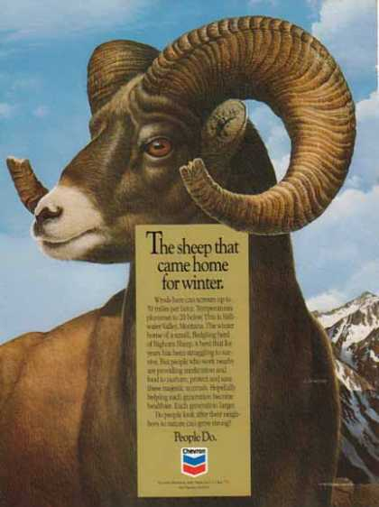 Chevron – The sheep that came home for winter (1992)