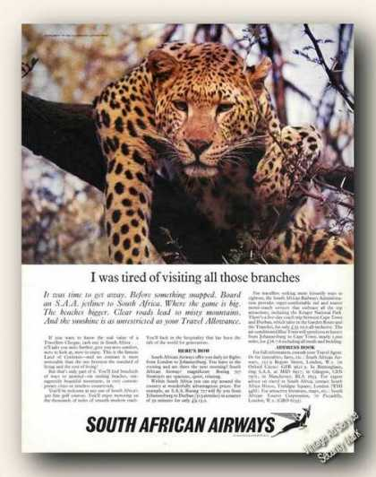 South African Airways Leopard In Tree (1967)