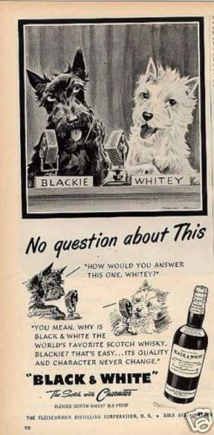 """B&w Ad """"No Question About This"""" Westie/scottie (1954)"""