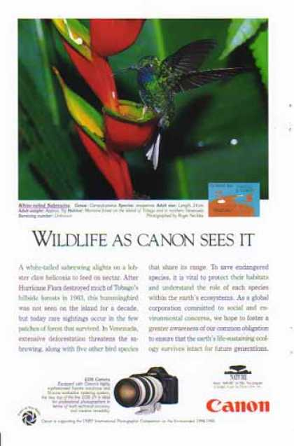 Canon EOS- 1N Camera – White Tailed Sabrewing Bird (1995)