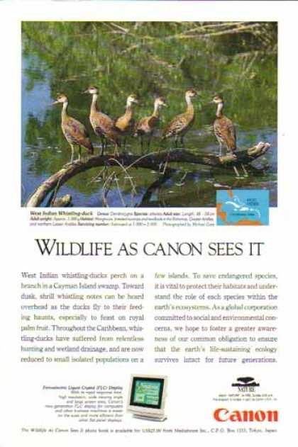 Canon Ferroelectric Liquid Crystal Display – West Indian Whistling Duck (1994)