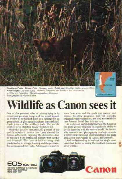 Canon EOS 620 650 SLR Cameras – Southern Pudu Deer (1988)