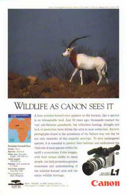 Canon L1 8mm Video Camcorder – Scimitar Horned Oryx (1991)