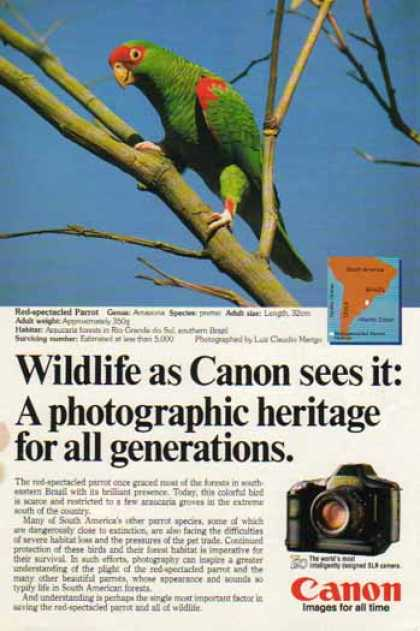 Canon T90 SLR Camera – Red Spectacled Parrot (1986)
