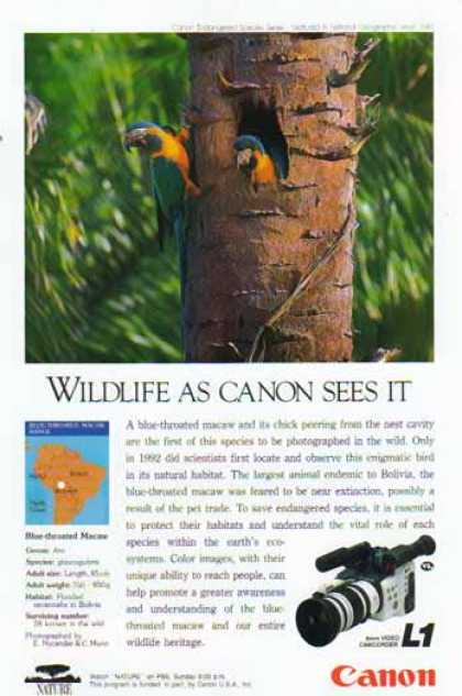 Canon L1 8mm Video Camcorder – Blue Throated Macaw (1993)