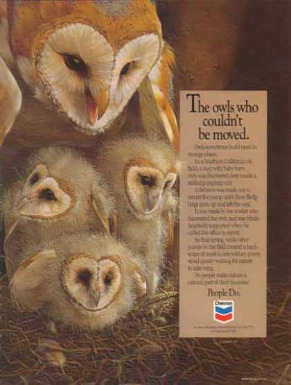 Chevron – The owls who couldn't be moved (1990)
