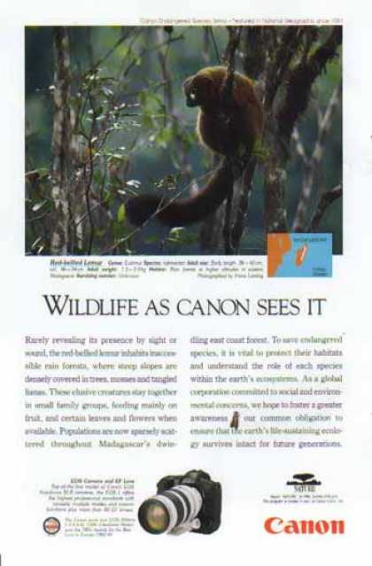 Canon EOS Camera and EF Lens – Red Bellied Lemur (1994)
