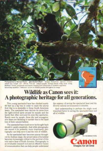 Canon FD 150-600mm f/5.6L Lens – Spectacled Bear (1985)