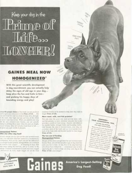Gaines Dog Meal Boxer Dog (1952)
