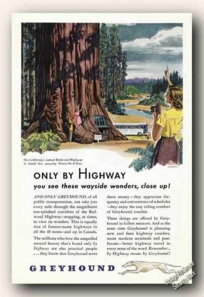 Greyhound California Redwood House In a Tree (1947)
