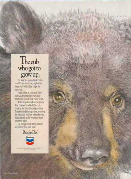 Chevron – The cub who got up to grow up (1992)